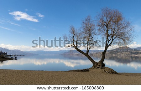 Bare Trees by Mountain Lake in Spring - stock photo