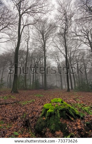 Bare trees in rural woods on a misty winter day in Oxfordshire, England.