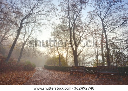 Bare trees in the autumn forest park in the morning - stock photo