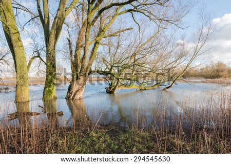 Bare trees in the floodplain lakes of a Dutch river in the winter season. It is still early in the morning. - stock photo