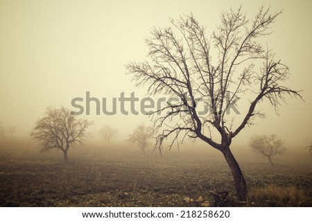 bare trees in the fog, Zaragoza province, Aragon, Spain. - stock photo