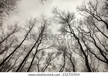 Bare trees of an autumn forest - stock photo