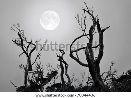 Bare trees with full moon background in a scary and spooky scene as Halloween theme. - stock photo