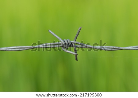 Bared Wired with green background - stock photo