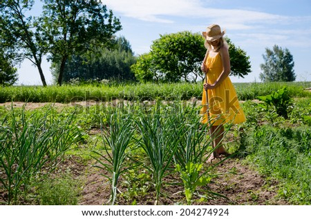 Barefoot gardener woman girl in dress and hat work in garden with hoe between garlic and pea plants.  - stock photo