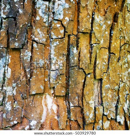 Bark of a tree, close up, square image for background