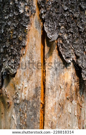 bark of a tree with split wood in Canada