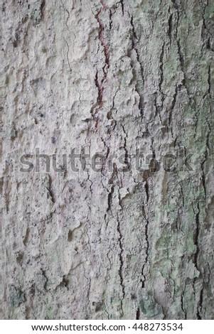 Bark of alive tree - close up background - stock photo