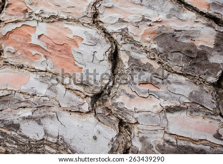 Bark of live pine tree texture closeup. Broken in the middle - stock photo