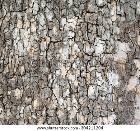 bark of old tree texture - stock photo