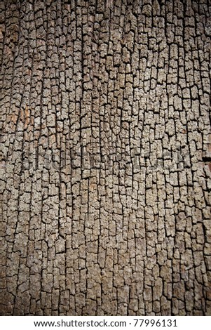Bark of tree - stock photo
