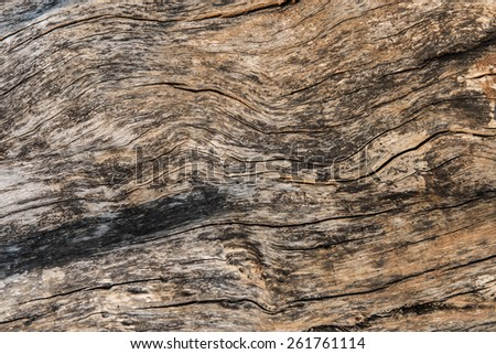 bark of tree background and texture. - stock photo