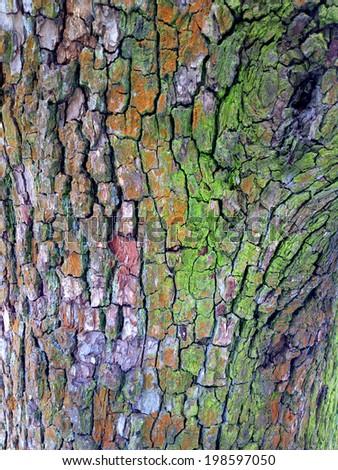 Bark of tree / outdoors photography of tree bark texture  - stock photo