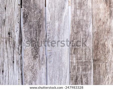 bark of tree texture - stock photo