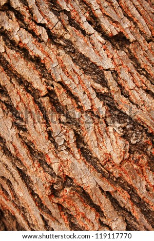 Bark of tree,tree texture - stock photo
