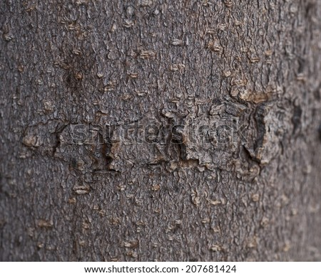 Bark of tree. Wood texture - stock photo