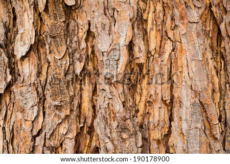 Bark texture for background - stock photo