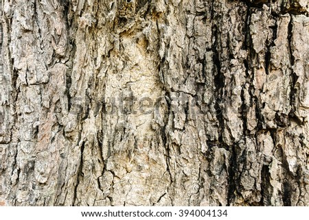 Bark texture for background