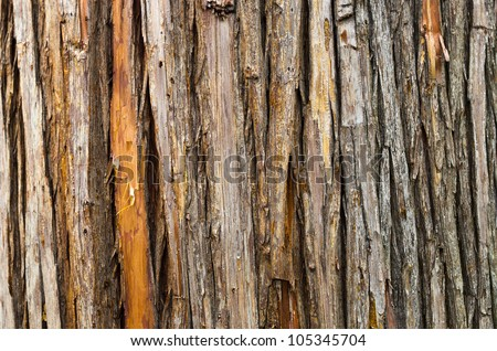 Bark Texture of a Dead Tree - stock photo