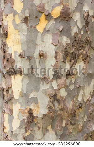 Bark texture tree trunk - stock photo