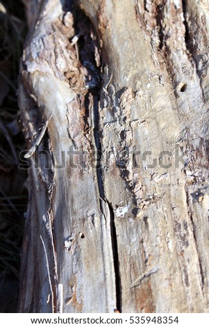Bark tree closeup