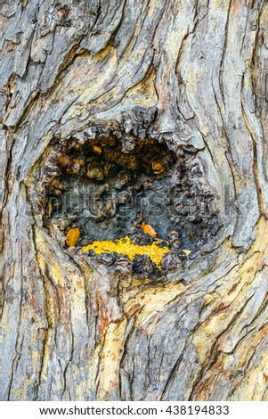 bark tree texture for background