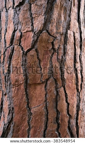 Bark tree textured light brown color