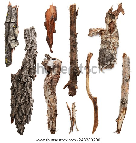 Bark trees isolated on white background - stock photo