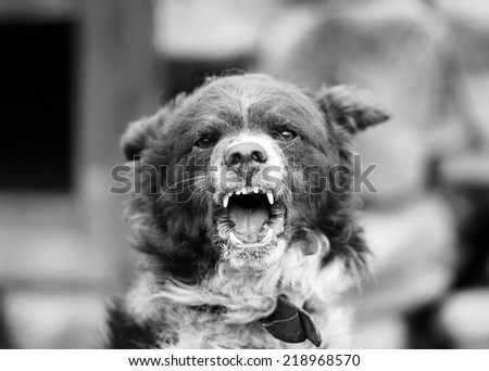 Barking enraged dog outdoors - stock photo