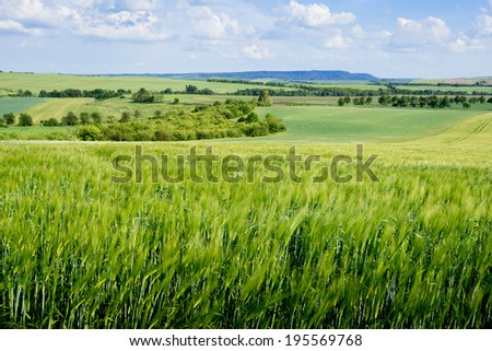 barlei field in the summer in Czech Republic - stock photo