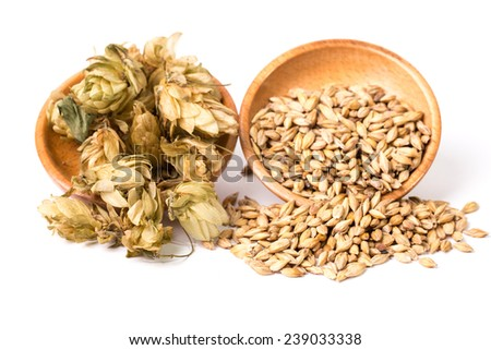 barley and hops - stock photo