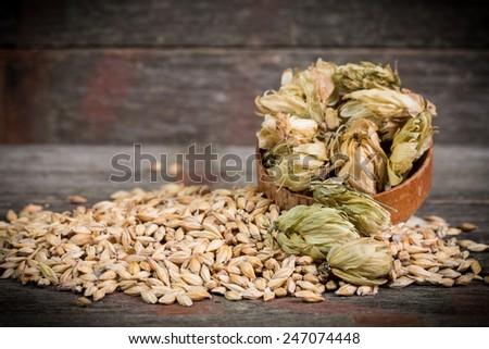 barley and hops - stock photo
