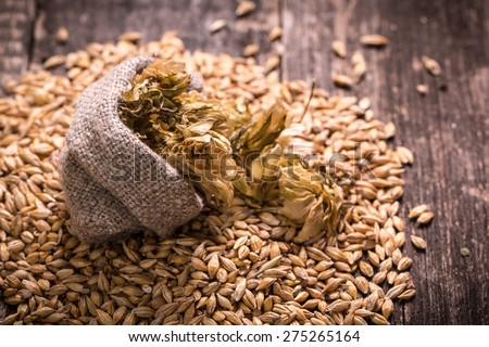barley and hops on wooden table - stock photo