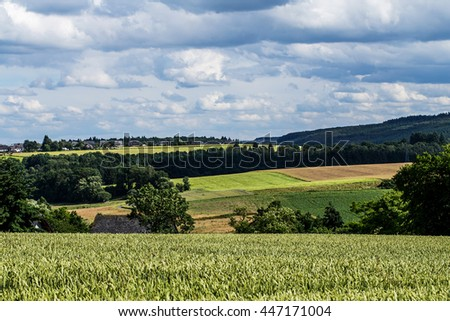 barley field  landscape on day noon light with blue and cloudy sky.