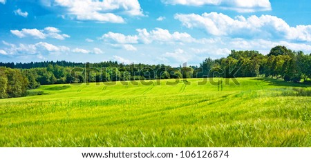 Barley fields undulating the middle of woods - stock photo