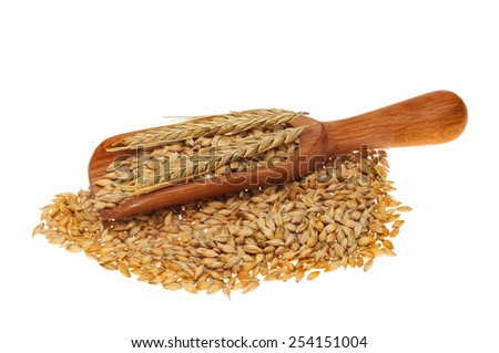Barley grain and ear of barley in a wooden scoop isolated against white - stock photo