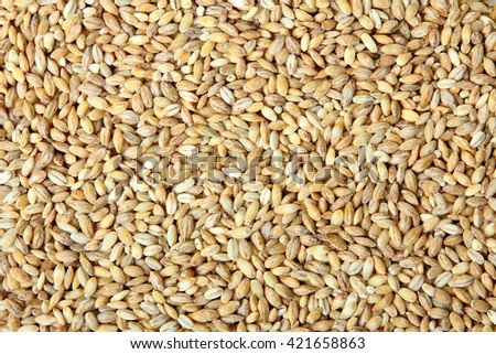 barley lying on a flat surface close up view of texture