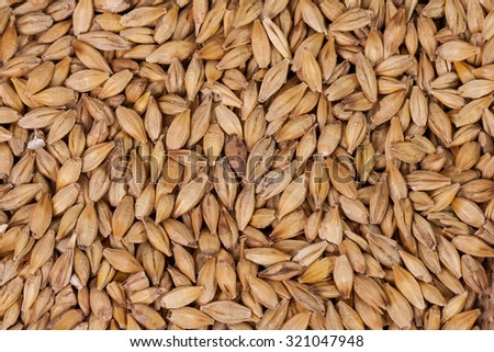 Barley, wheat, corn beans. Grains of malt close-up. Barley on sacking background. Food and agriculture concept. - stock photo