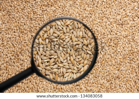 barley with a magnifying glass as the background