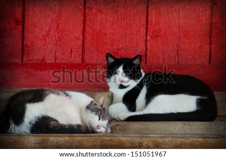 barn cats by red barn with textured overlay