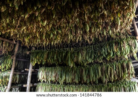 Barn for drying of tobacco, Vinales, Cuba