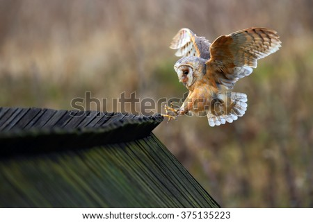 Owl Flying Stock Images, Royalty-Free Images & Vectors ...