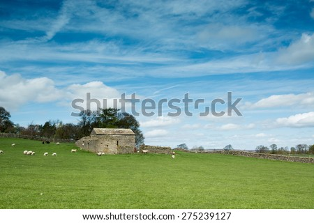 Barn, sheep & blue sky