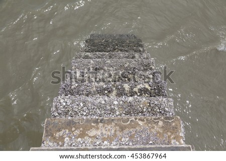 barnacle seashell on cement step - stock photo