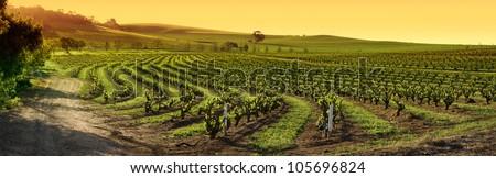 Barossa Valley vineyard panorama sunset - stock photo