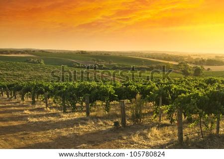 Barossa Valley vineyard sunset - stock photo
