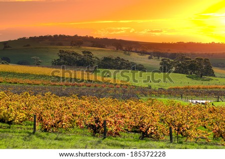 Barossa Valley Vineyards - stock photo