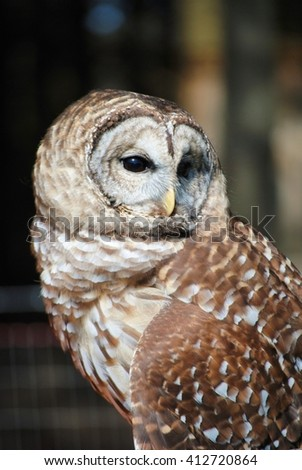 Barred Owl looking wise and all-knowing