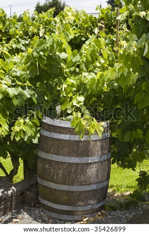 Barrel in Vineyard, New Zealand - stock photo