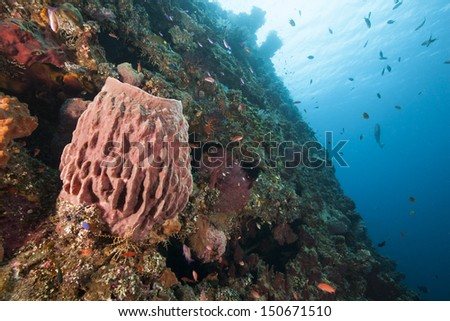 Barrel sponge and other corals and sponges on the Liberty Wreck in Bali, Indonesia.
